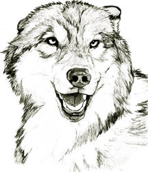 wolf by UndeterminedBreed