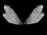 Silver Wings by JinxMim