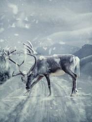 Winter Scene by LanaTustich
