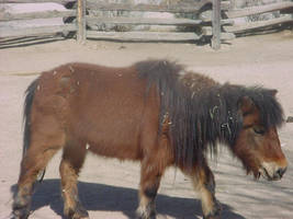 pony 2 by Breyer-Stock