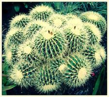 Cactus by Karl-B
