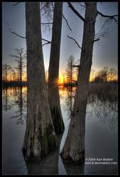 Sunset Through Cypress 2 by Karl-B