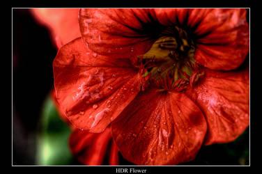 HDR Flower test by Jon4H