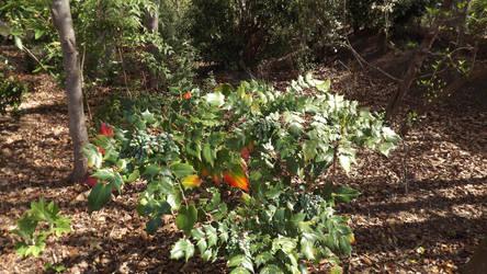 Odd Plant by namstrap