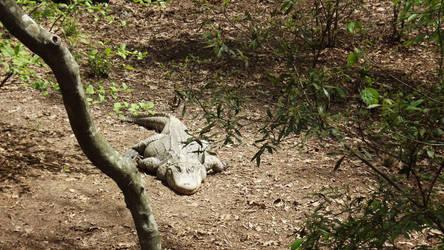 Sunworship Gator by namstrap