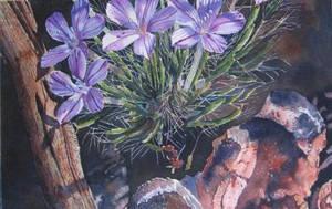 Desert Violet by judylee