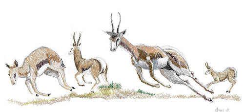 Pronking gazelle's by BlackClawedLion