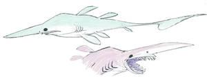 Goblin Sharks by okavango