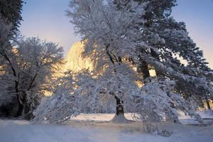 Yosemite Winter 2009 by ECaputo