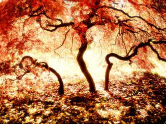 transcendental by dresdenblue