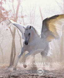 Pegasus by GRAPHICSOUL