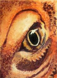 Dragon eye by Goodbye-to-you