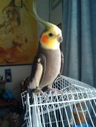 Talisen, the feathered one by kitsunesakurano