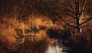 Creek by MoonKey19