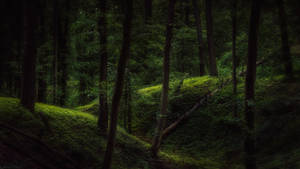 In the woods X by MoonKey19