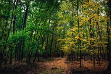 Battle of seasons by MoonKey19