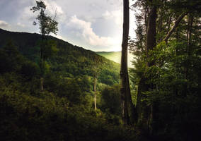 Wilderness by MoonKey19