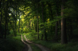 In The Woods XIX by MoonKey19