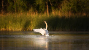 Swan III by MoonKey19