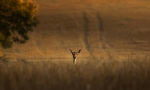 Deer by MoonKey19