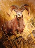 Ram by patispringmeyer