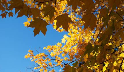 Autumn Gold by AntesQueLuz
