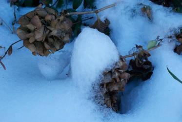 Dead of Winter by AntesQueLuz
