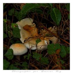 Mushrooms by laurentroy