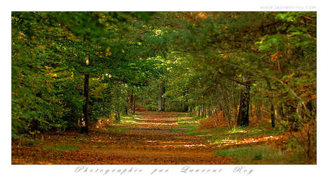 Quiet path in the woods by laurentroy