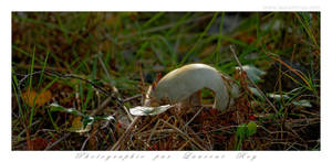 White mushroom half bitten by laurentroy