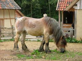 an old belgian draft horse by ChantalToutenhoofd