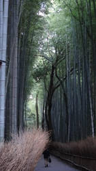 Arashiyama Bamboo Grove (Kyoto) by Alicelis88