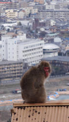 Macaque at Iwatayama Monkey Park (Kyoto) by Alicelis88