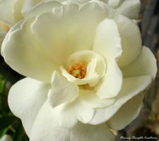 White Peace.. by Misty-Lane