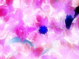 Blossom by Misty-Lane