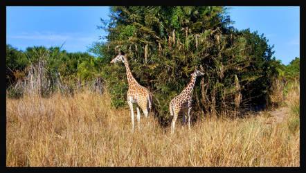 Giraffes by Captain-Planet