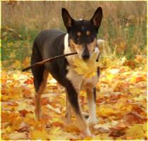 Autumn Dog by laracoa