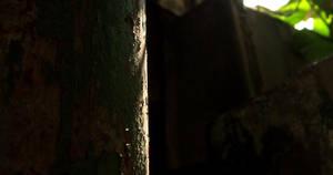 Into the Dark by laracoa