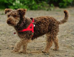 Teddy Doggy by laracoa