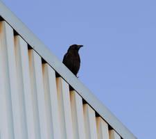 Geometry Crow by laracoa