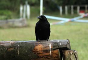 The Crow by laracoa