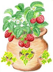 Strawberry Pot by Dvorty