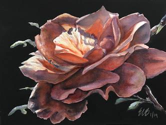 Night Rose by ebjeebies