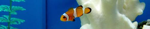 Little Fishy...Little Fishy by atlantisak