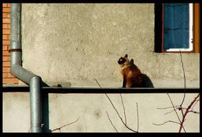 cat by bodisz