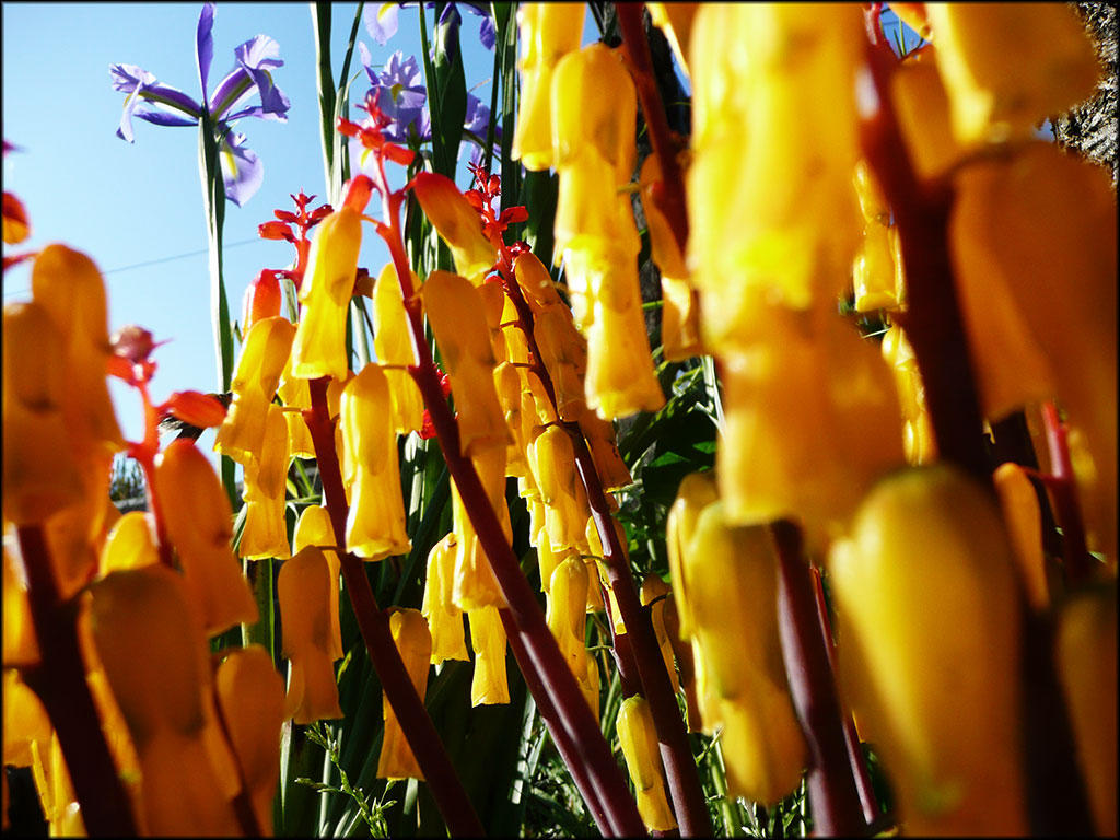Yellow Tube Flowers By Xispes On Deviantart