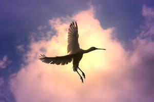 Spoonbill Stork - Wild Birds - Color Flight by LivingWild