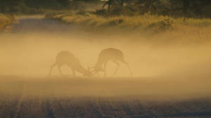 Impala - African Wildlife - Fight of Dust and Blur by LivingWild
