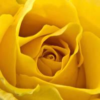 Hello Yellow by melmaya