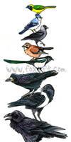 Bird Stack - Corvidae by Foxfeather248